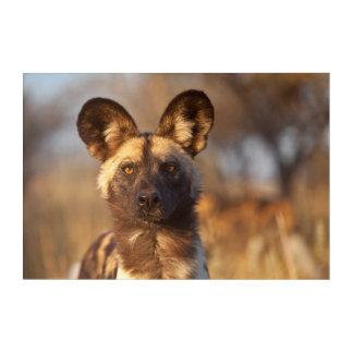 Impressions En Acrylique Portrait de chien sauvage