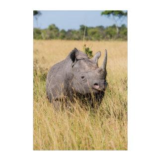 Impressions En Acrylique Portrait de rhinocéros noir