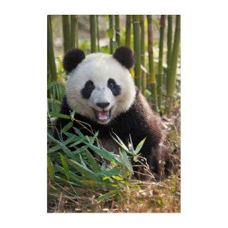 Impressions En Acrylique Portrait de sourire de panda