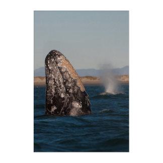 Impressions En Acrylique Portrait de tête de baleine grise