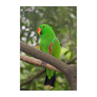 Impressions En Acrylique Portrait vert de perroquet