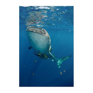 Impressions En Acrylique Requin et poissons de baleine