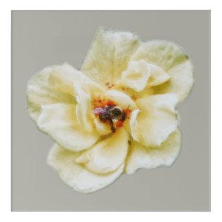Impressions En Acrylique S'est levée et l'abeille