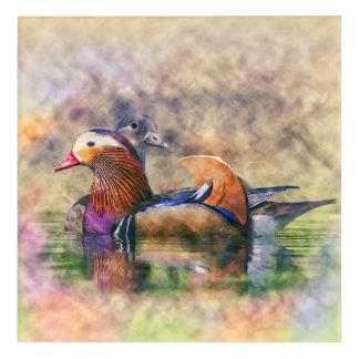 Impressions En Acrylique Symbole de Feng Shui de canards de mandarine