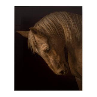Impressions En Acrylique Tête de cheval sur le noir