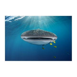 Impressions En Acrylique Tête d'un requin de baleine