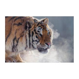Impressions En Acrylique Tigre un matin froid