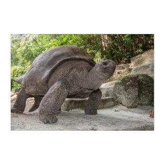 Impressions En Acrylique Tortue géante d'Aldabra