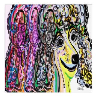Impressions En Acrylique Transition de couleur de caniche