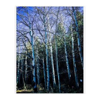 Impressions En Acrylique Trembles et pins en automne