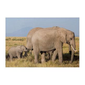Impressions En Acrylique Troupeau d'éléphant avec des jeunes