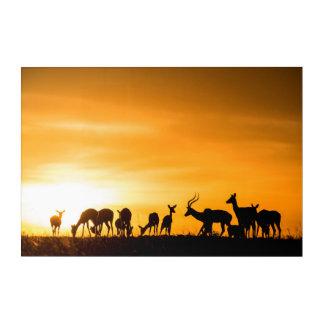 Impressions En Acrylique Troupeau d'impala au coucher du soleil