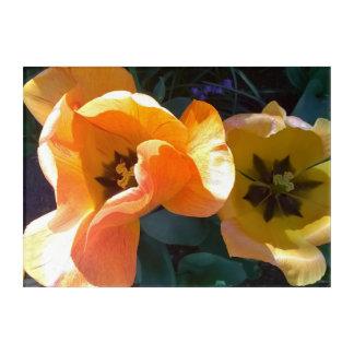 Impressions En Acrylique Tulipe hybride orange crème