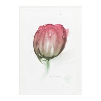 Impressions En Acrylique Tulipe rouge