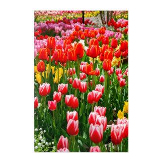 Impressions En Acrylique Tulipe rouge par Jared Windmüller