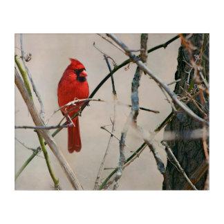 Impressions En Acrylique Un oiseau cardinal rouge sur une branche dans les
