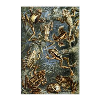 Impressions En Acrylique Variété d'Ernst Haeckel de grenouilles exotiques :