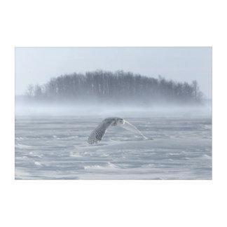 Impressions En Acrylique Vol de hibou de Milou en hiver