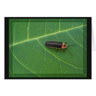 Insecte de foudre sur la feuille cartes