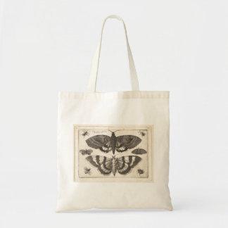 Insecte vintage de nature de lépidoptères de mite sacs de toile