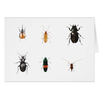Insectes 2011 carte de vœux