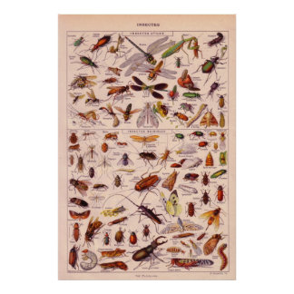 Insectes Posters
