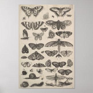 Insectes vintages de lépidoptères d'entomologie posters