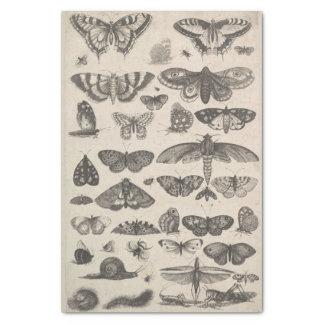 Insectes vintages Decoupage de lépidoptères Papier Mousseline