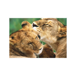 InspireMe Collecshions. Lions d'Intiguing du Kenya Toile