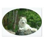 Invitation arctique de loup