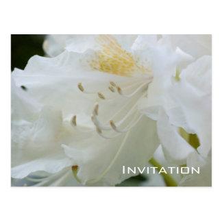Invitation blanche du rhododendron | carte postale