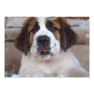 Invitation de chien de St Bernard
