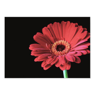 Invitations rouges de Gerbera