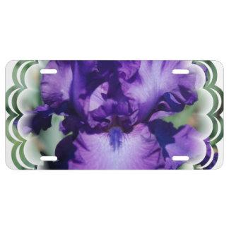 Iris barbu pourpre