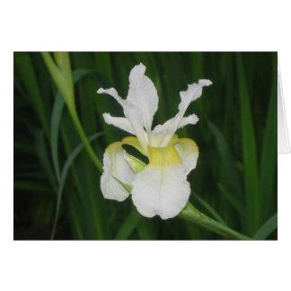 Iris blanc carte de vœux