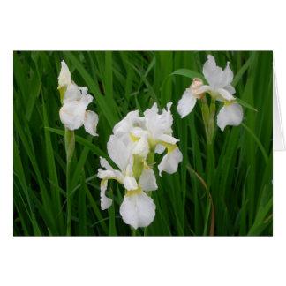 Iris blanc cartes de vœux