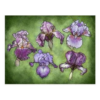 Iris dans le pourpre carte postale