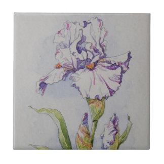 Iris de rayure de 5340 pourpres carreau