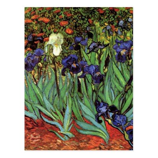 Iris de Van Gogh, art vintage de post impressionni Cartes Postales