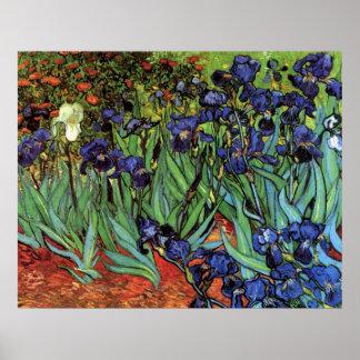 Iris de Van Gogh art vintage de post impressionni Posters