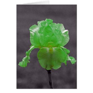 Iris de vert de chaux carte de vœux