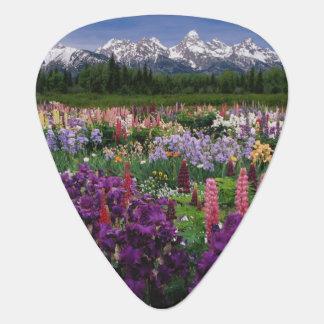 Iris et jardin de loup et chaîne de Teton, Médiators