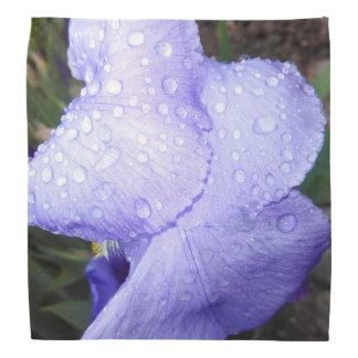 Iris germanique pourpre avec quelques gouttes de bandanas