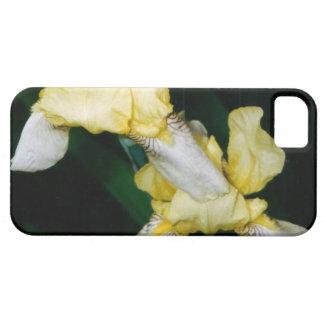 Iris jaune étuis iPhone 5