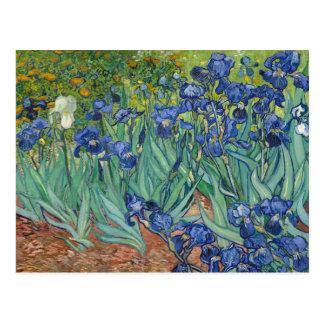 Iris par des cartes postales de Van Gogh
