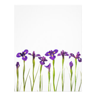 Iris pourpres - modèle customisé par fleur d'iris prospectus 21,6 cm x 24,94 cm