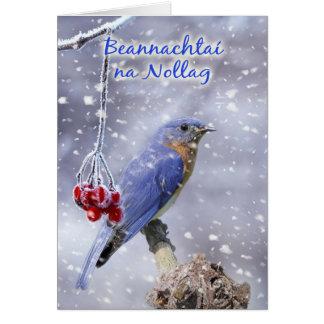 Irlandais - carte de voeux bleue de Noël d'oiseau