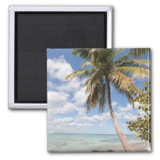 Isla Saona - palmier à la plage Magnet Carré