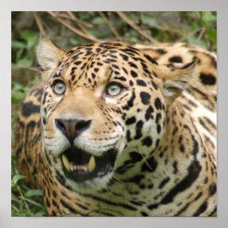 jaguar10x10 poster