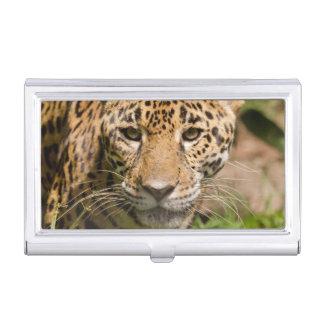 Jaguarclose-up de visage étui pour cartes de visite